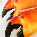 Free stock photo Two stone crab claws