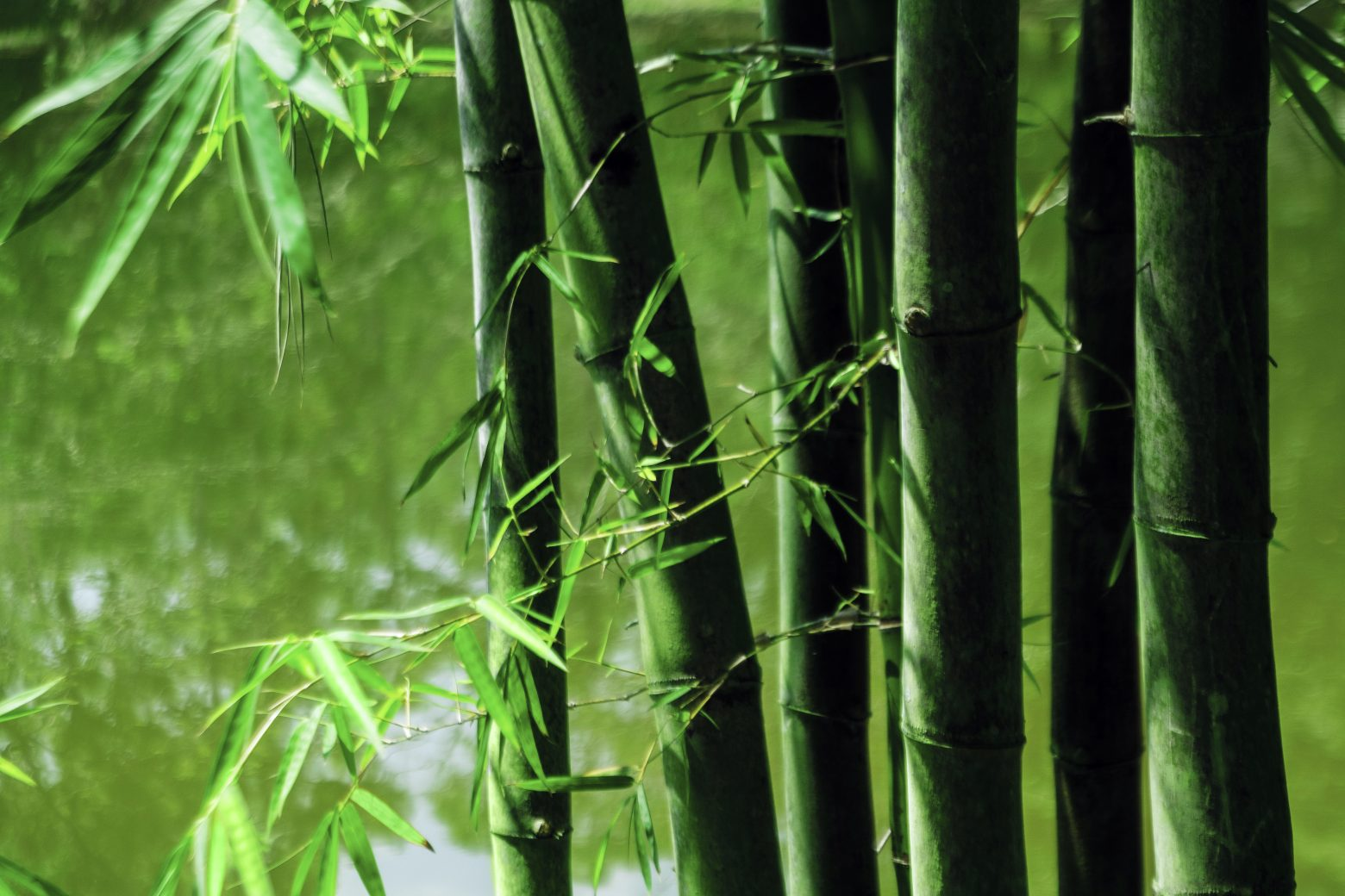 bamboo garden background - Bamboo Garden